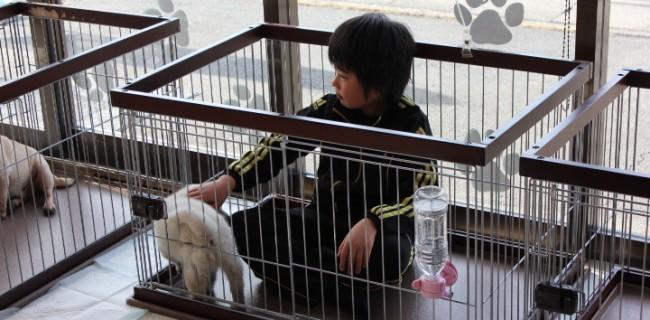柴犬と友達になった男の子(^0_0^)