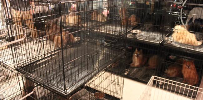 繁殖犬30頭、店内に入場(=^・・^=)