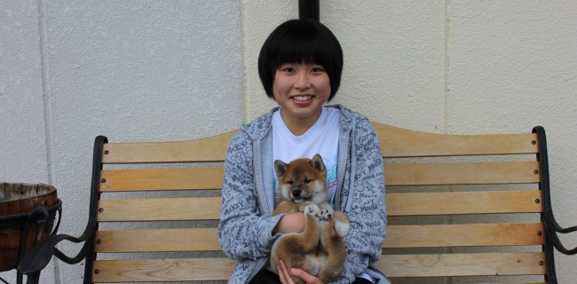 柴犬の男の子、新しいご家族が決まりましたぁ(^o^)