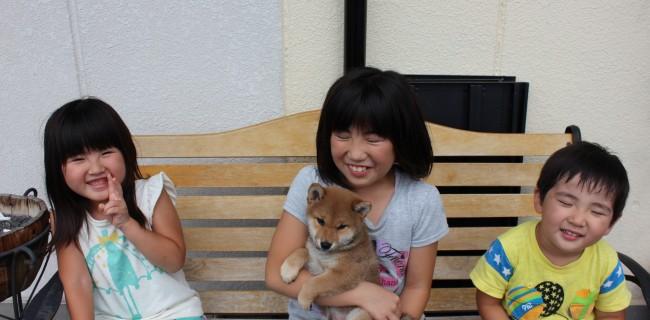 柴犬の男の子、新しいご家族が決まりましたぁ(*^_^*)