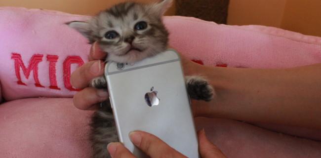 iPhoneケース NEW