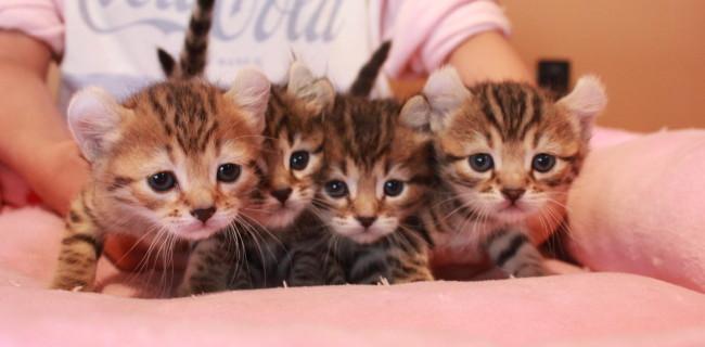 可愛い4姉妹♡