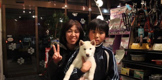 柴犬の男の子の飼い主様が決まりました(^o^)