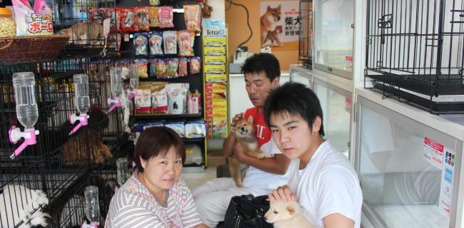 柴犬(淡赤)の男の子、新しいご家族が決まりましたぁ(*^_^*)