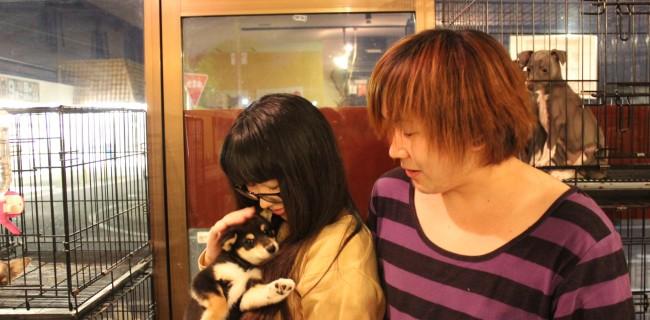 柴犬の女の子、新しいご家族が決まりましたぁ(^o^)