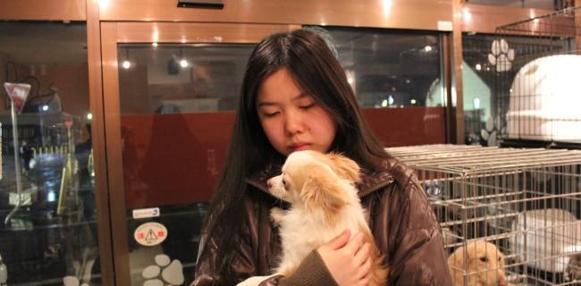 ロングコートチワワのおとこの子、新しい飼い主様が決まりましたぁ(*^▽^*)