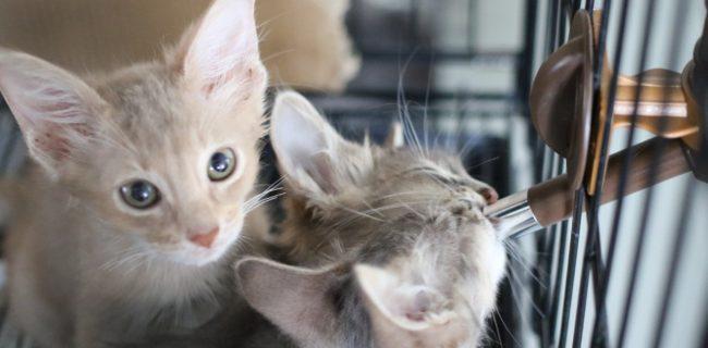 【#世界猫の日】お水を飲む子猫ちゃん♡